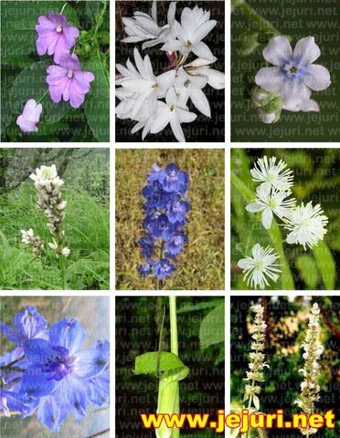 flora purandar