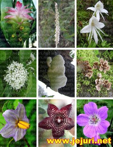 purandar flora
